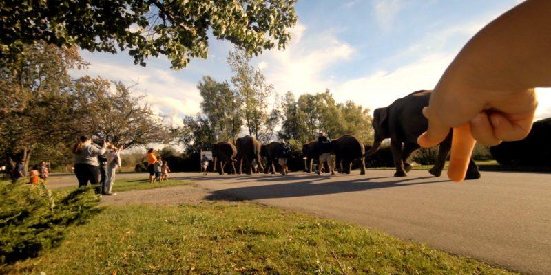 African Lion Safari elephants
