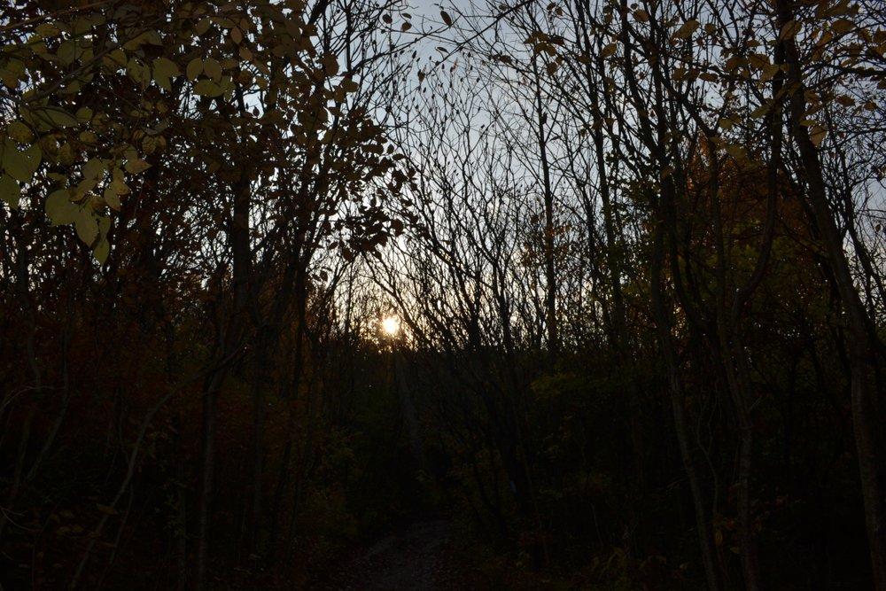 Trees in the dark