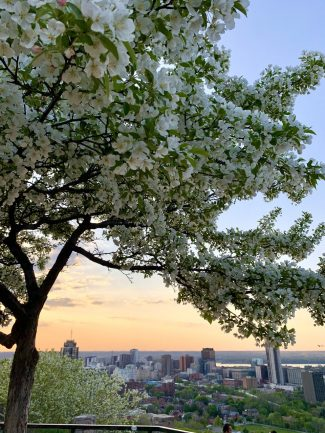 Photo at the Sam Lawrence Park during spring with beautiful view of the city