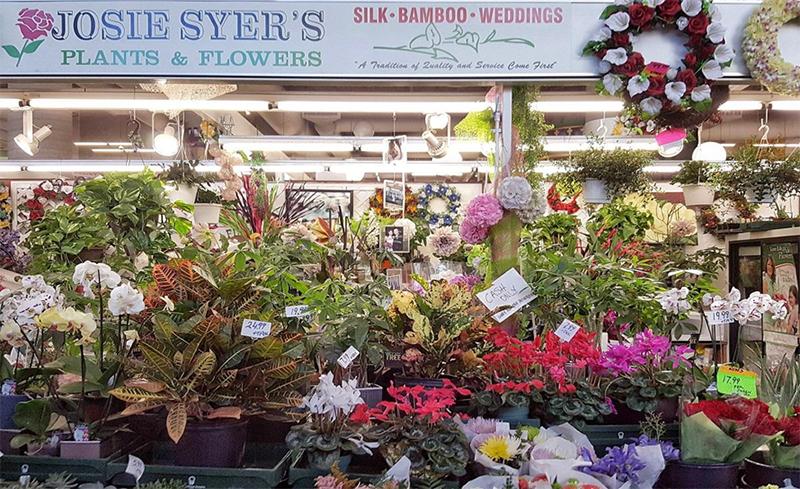 Josie Syers Flowers