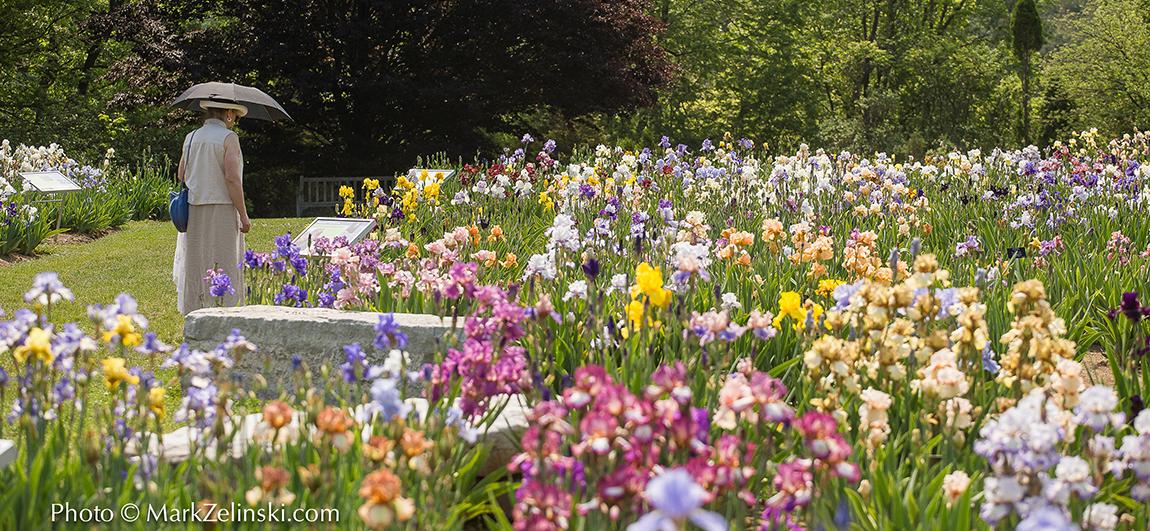 RBG flower garden