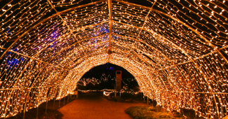 Winter lights at RBG