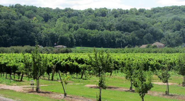 winery_vineyard_escarpment