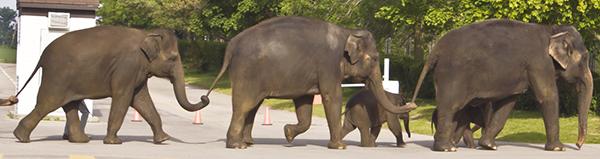 ElephantCrossing.Credit.Brian Douglas