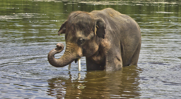 Elephant_water_002.Credit