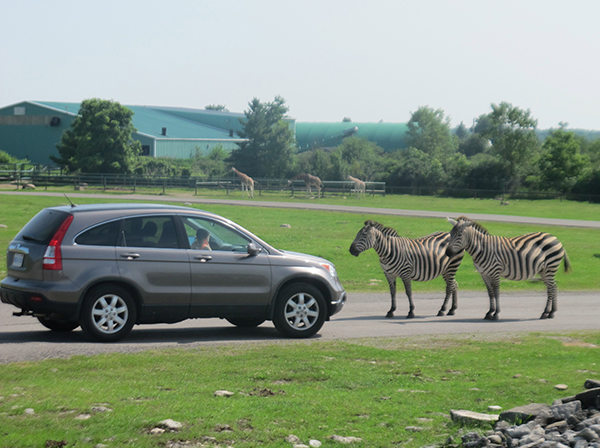 Animal Attraction: Behind the Scenes at African Lion Safari