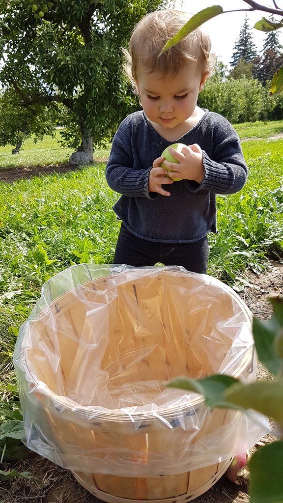 Carluke Orchards - child with apple