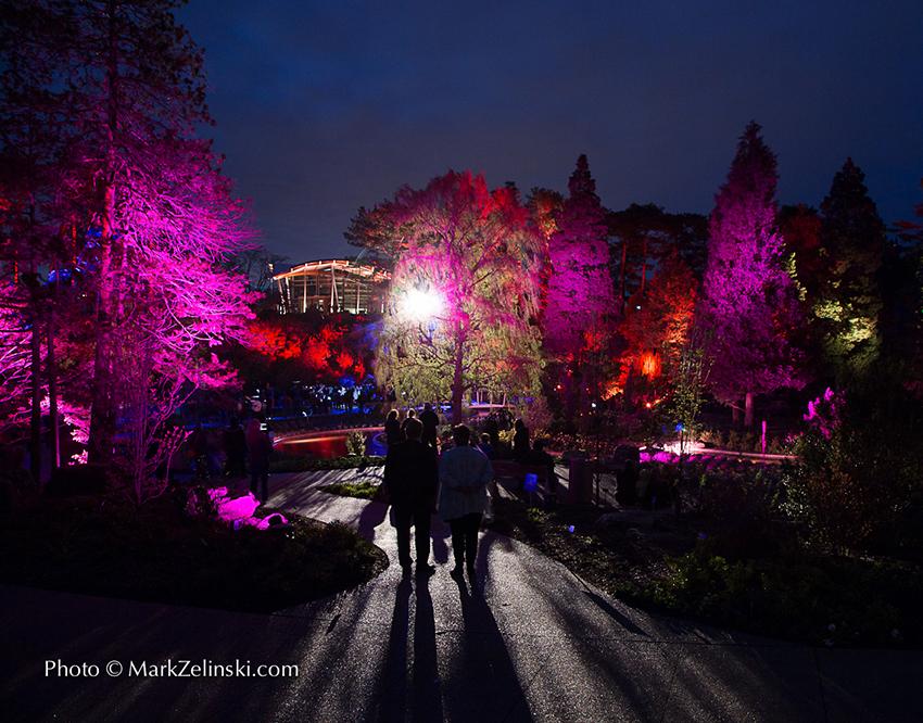 Photo of Winter Lights at RBG's Rock Garden