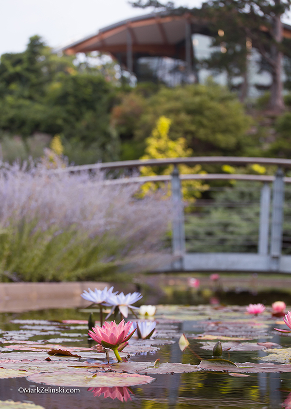 RBG Water lily